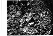 weimar-scans001
