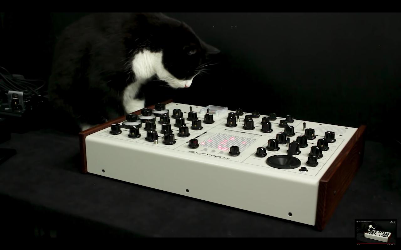 syntrx cat